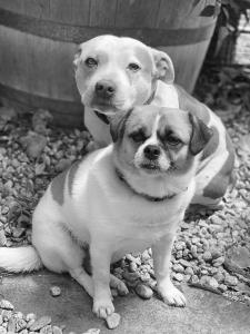 Piper & Chica
